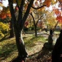 栗の木テラス