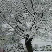 春の合間の雪景色