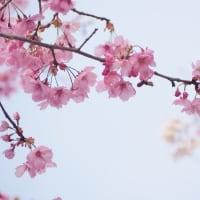 春の花から元気をもらいました