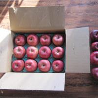 昨日の林檎達と朝焼け