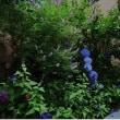 青い花たち♪