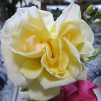 変わり咲きのバラ