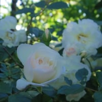 庭のバラ写真たくさんと、お金の回し方のそれぞれ