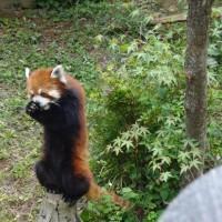 千葉市動物公園(ちばしどうぶつこうえん)
