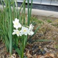 我が家の お花様達  633