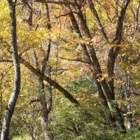 八ヶ岳山麓の秋