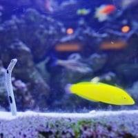 板橋区立熱帯植物館の魚たち