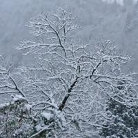 美山雪の情報 1月23日(月)午前7時