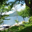 平和への希い850 日光中禅寺湖の木々に異変???