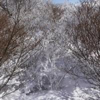 伊香保森林公園でスノーシュー