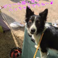 2016-2017 GAME40 (裾野大会)