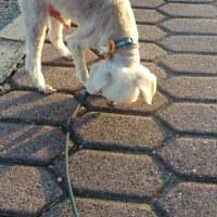 愛犬チロのかっとにいってきました。