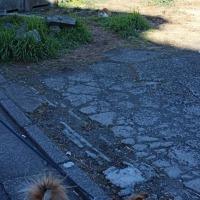 ノラ猫の三叉路サンクチュアリ
