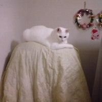 猫は高いところがお好き(^_^;)