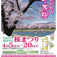 宮城県柴田町 船岡城址公園の桜 と 愛犬 ルナ