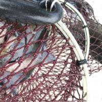 クロの釣果  3月22日