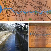 石神井川沿いの散歩道
