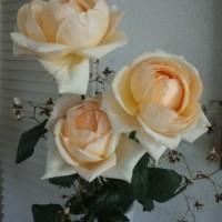 肥大化した薔薇