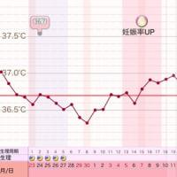 D35 高温期20日目