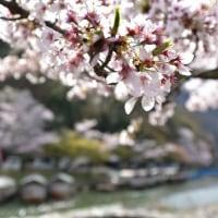 京都、嵐山渡月橋p4(D810、18-35mm)