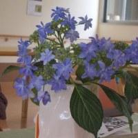 花好きの集まるリハビリ室、庭の花を持ち寄り、花談議。いつも花があると和みます。