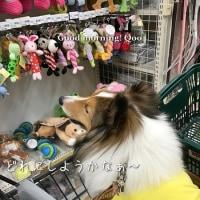 おもちゃ売り場で、おっ買いもの~♪