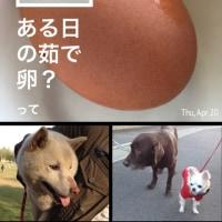 ある日の茹で卵