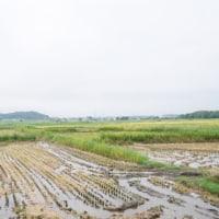 農地基盤整備をするべきと考える。
