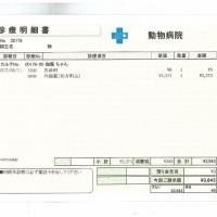 伽羅の肝炎&脳卒中&甲状腺障害日記