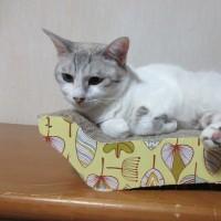 猫とパフェの日