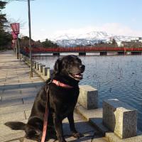 高田公園は観桜会の準備中