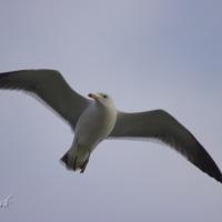 Birds Inlay