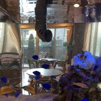 魚の入れ替えと水槽メンテナンス