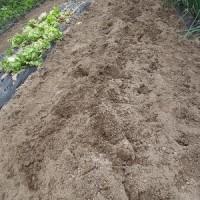 4/13(木)畑の整備と、自然薯の様子!