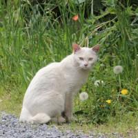 猫探訪・・春の野原で