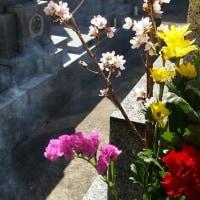 門徒会と墓参