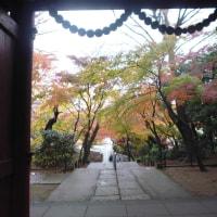 紅葉の本土寺そして東漸寺!そそくさと走ってきました。