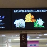 第13回関西らんフェスタ 於・京阪百貨店