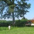 八紘学園の、ポプラと白樺の並木道に涼を求めて