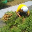 無農薬野菜の宿命