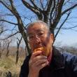 日影沢林道、小仏城山、高尾山-スミレ-4月14日(金)