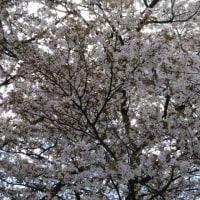 本屋親父のつぶやき 4月23日広がる奥能登国際芸術祭会場