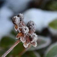 ロキ・シュミット庭園の雪景色