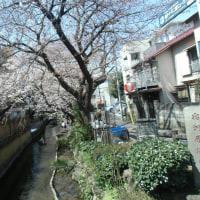 川崎二ヶ領用水の桜と家康のインフラ整備