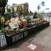 新潟市の出展花壇