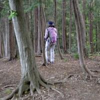 鐘撞堂山 エゴの木