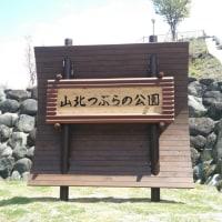 4/24(月)山北つぶらの公園