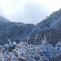 雪の朝の丸山