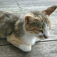 大島大橋と菖蒲?と猫