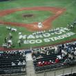 夏の高校野球、新潟大会、開幕
